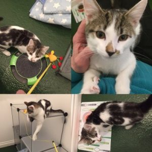cattery-charlie-mix