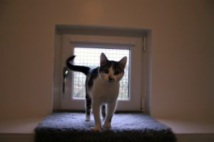 cattery-charlie-window